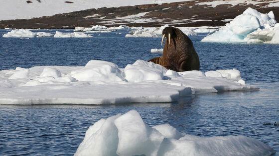 Ученых испугали последствия глобального потепления