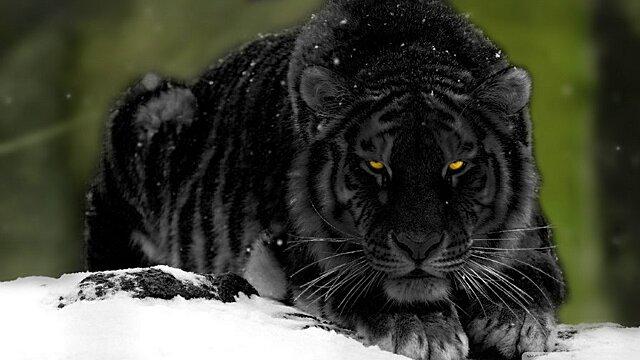 Энергетические аспекты 2022 года Чёрного или Водного Тигра