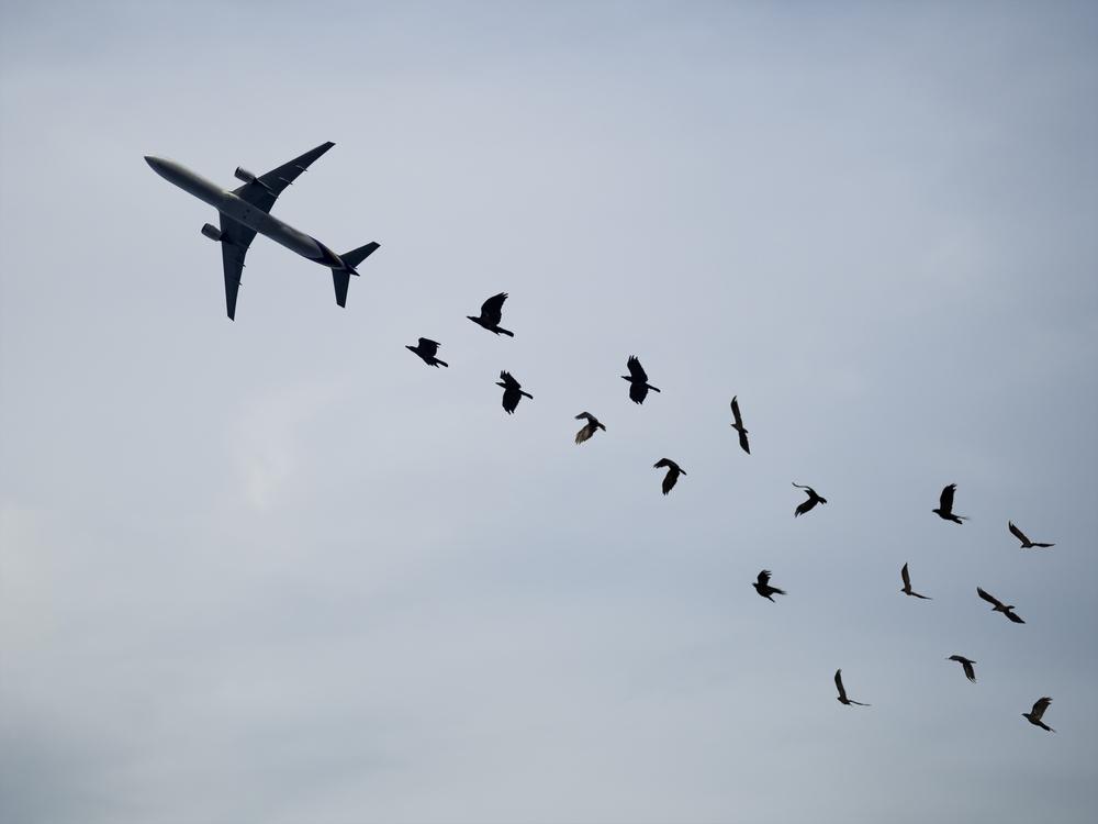 Почему столкновение птицы исамолета такопасно — Рамблер/путешествия
