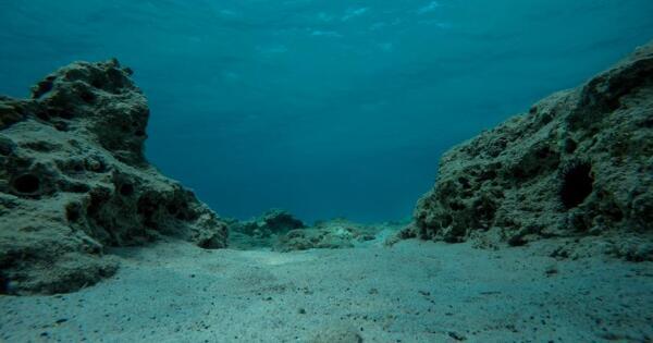 УАзорских островов обнаружены редкие черные кораллы