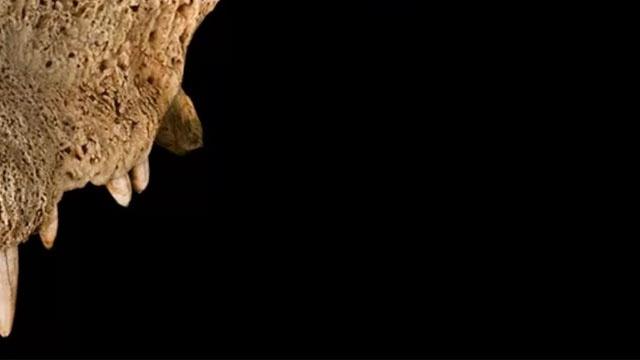Раскрыта тайна древнего вымершего рогатого крокодила