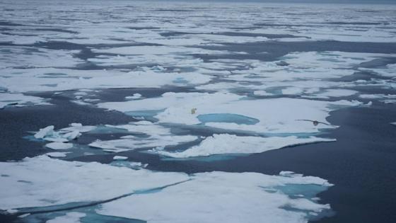 Федор Конюхов готов в одиночку очистить Северный полюс от пластика