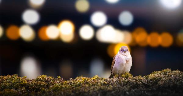 Световое загрязнение поночам приводит кгибели перелетных птиц