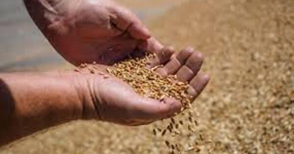 Минсельхоз может ввести пошлину наэкспорт пшеницы изРоссии