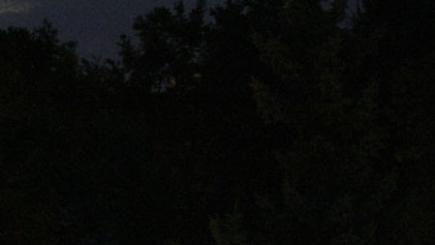 Ученые объяснили способность деревьев расти по ночам