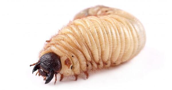 Неубиваемые коловратки: ученые оживили червей, замороженных 24тыс. летназад