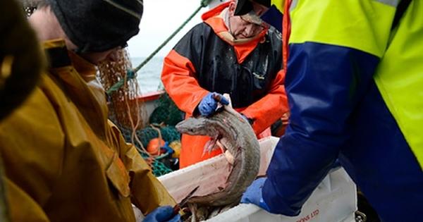 Британии предложили тепло вобмен нарыбу