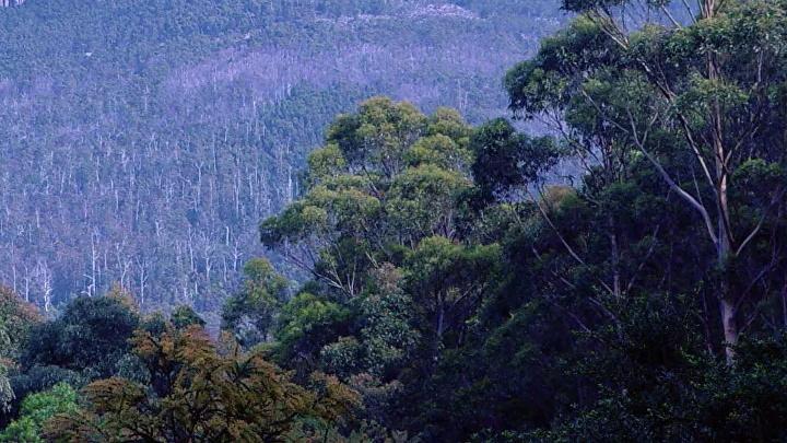 Раскрыта тайна вулканов Австралии