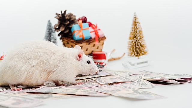 Прогноз Ба Цзы на декабрь: чего ждать от двойной Крысы