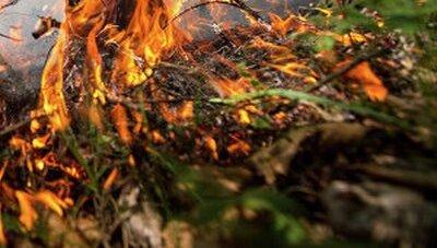 Площадь лесных пожаров в России выросла почти на 20%