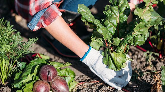 Астрология огорода: как вырастить богатый урожай