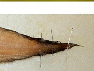 Ученые открыли новый вид рыб в Беринговом море