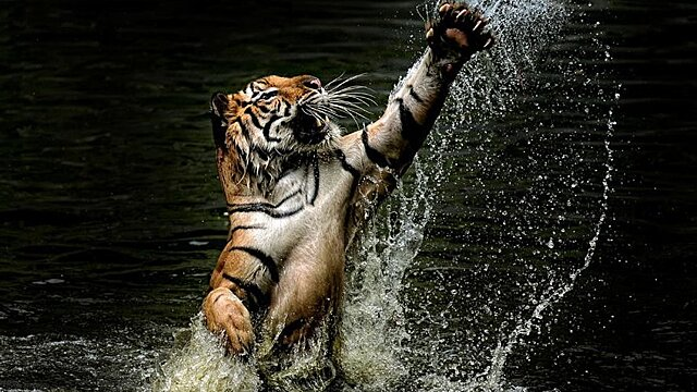 Энергетические аспекты 2022 года Чёрного или Водного Тигра. Часть 3