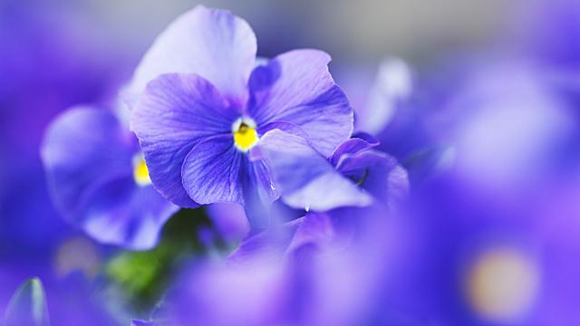 Цветы, которые забирают женское счастье