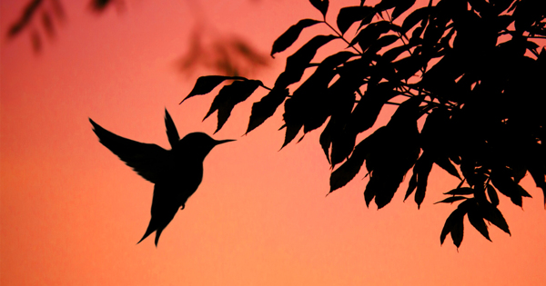 Птицы могут летать благодаря мутации вгене