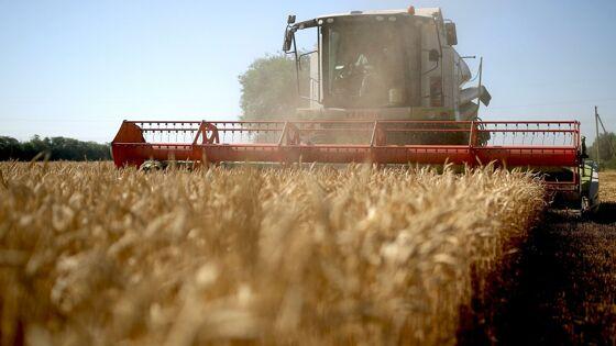 Аграрная сверхдержава: как глобальное потепление повлияет на Россию