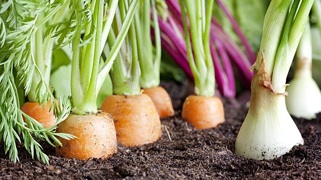 Астролог рассказал, как вырастить богатый урожай