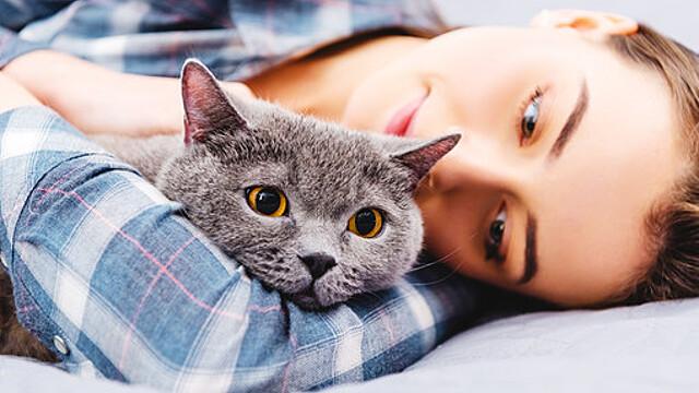 Психологи рассказали о секретном приеме для дружбы с кошкой