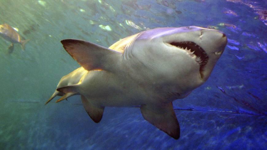 Акула откусила руку мужчине вЕгипте