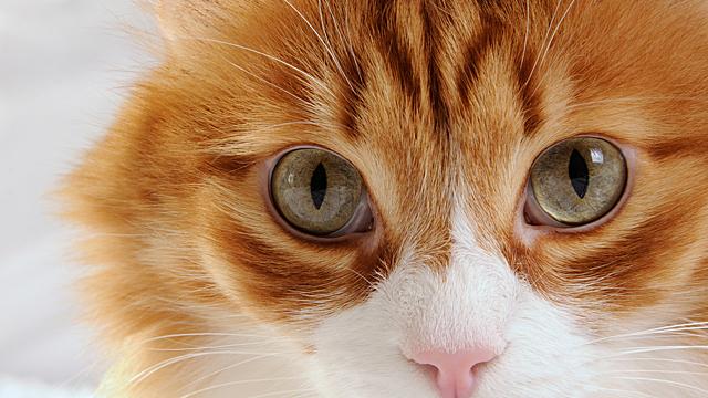 Как цвет кошки влияет на судьбу ее хозяина