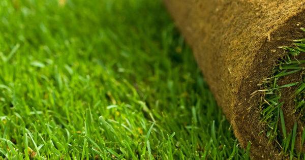 Рулонный газон — минусов больше, чем плюсов — Рамблер/новости